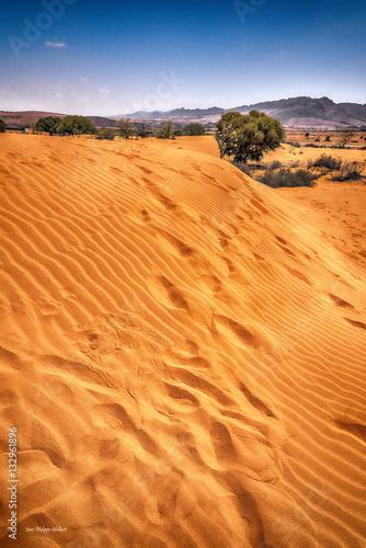 Poster désert 11