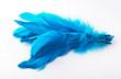 Exotic blue bird feathers isolated on white background