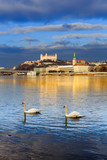 Swan couple lovers on Danube river, Bratislava castle and st. Ma