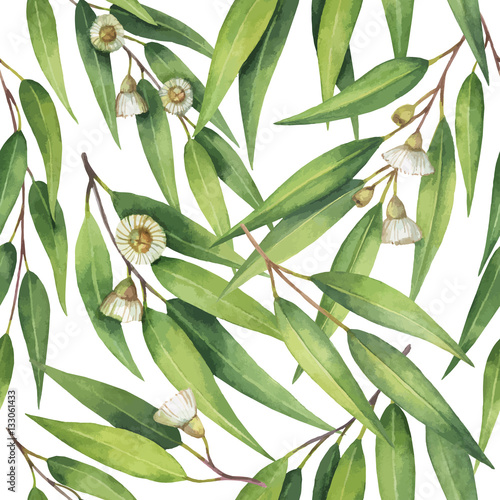 Watercolor vector seamless pattern with eucalyptus leaves and branches. - 133061433