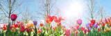 Glück, Lebensfreude, Frühlingserwachen, Leben: Buntes, duftendes Blumenfeld im Frühling :) - 133073243