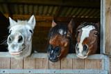 Funny horses in their stable - 133079273