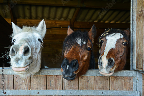 Fotobehang Paarden Funny horses in their stable