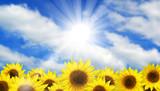 Sunflower Summer Sky