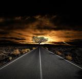 route lugubre arbre mort