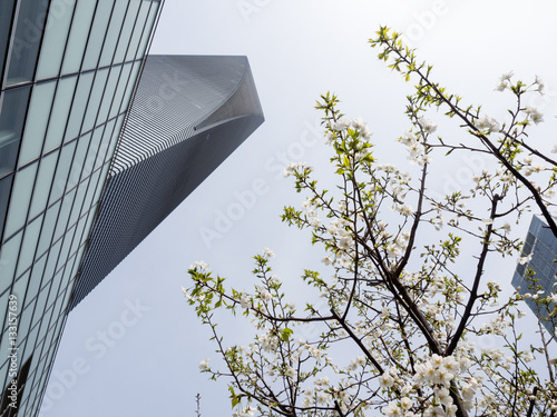 Poster Shanghai World Financial Center in spring with cherry blossoms