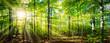 Leinwandbild Motiv Grüner Wald im Frühling und Sommer