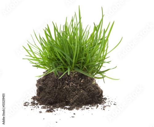 kępka trawy