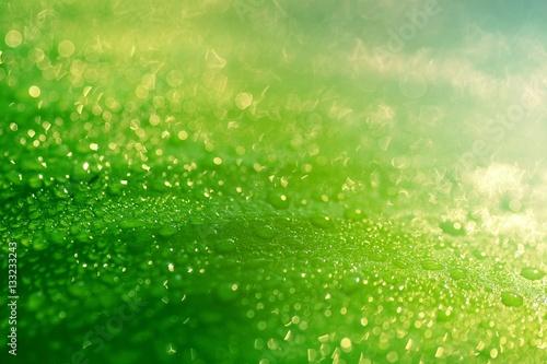 deszcz-spada-na-zielony-lisc-w-zblizenie