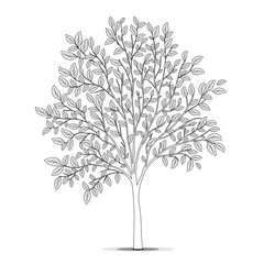 Tree with leaves silhouette on white background. Coloring book p