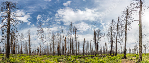 Dry forest against green grass and moss. - 133295826