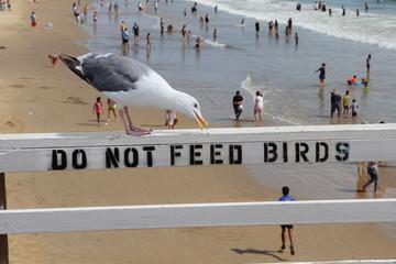 Bitte nicht fütern