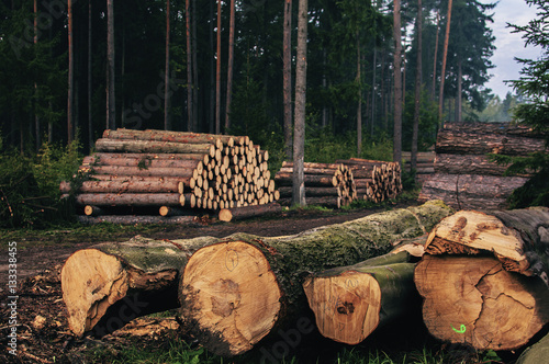 Logs of chopped trees lying in forest Poster