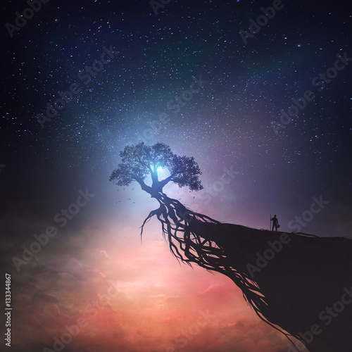 Tree and night sky