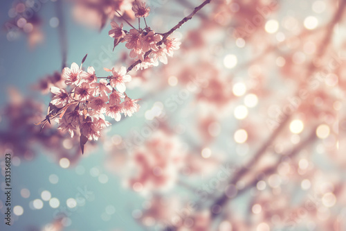 Fotobehang Kersen Close-up of beautiful vintage sakura tree flower (cherry blossom) in spring. vintage color tone style.