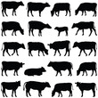 Cow collection - vector silhouette
