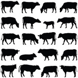 Cow collection - vector silhouette - 133375475