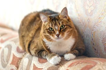 Staring ginger cat