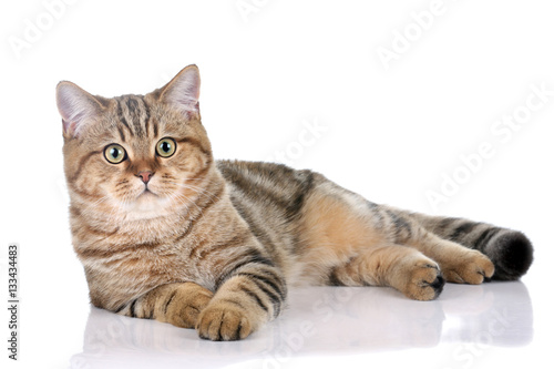 Beautiful striped cat on white background