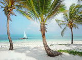 Tropical white beach with palm trees - 133438617