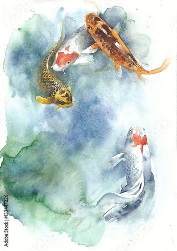 Koi fish watercolor painting isolated greeting card on white background - 133447226