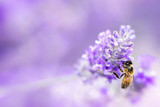Lavender with Bee Soft Focus