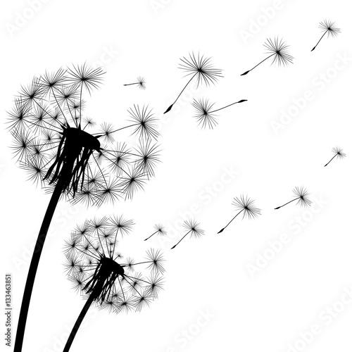 Fototapeta black silhouette of a dandelion on white background