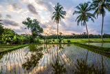 amzing sundown at balinese rice field, Indonesia
