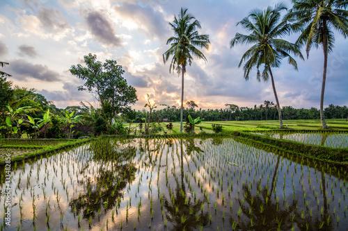 Fotobehang Bali amzing sundown at balinese rice field, Indonesia