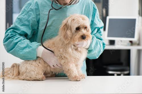 Poster Chien et soins vétérinaire