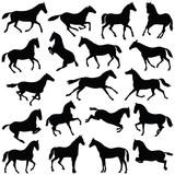 Horse collection - vector silhouette