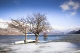 Lago ghiacciato con alberi