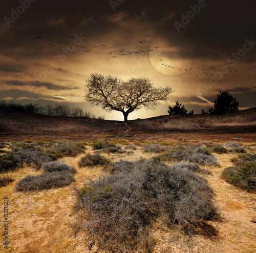 Poster paysage désert arbre fantastique décor aride sec sécheresse climat