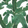 Watercolor painting Banana leaves seamless pattern