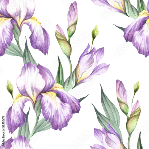 Seamless pattern with iris. Hand draw watercolor illustration. - 133570671