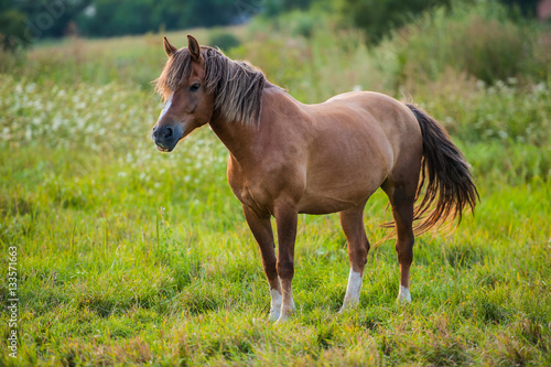 Poster horse grazing in a meadow