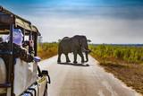 South Africa. Safari in Kruger National Park - African Elephants (Loxodonta africana) - 133574226