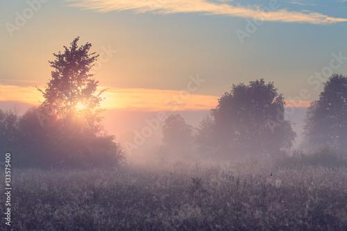 Fotobehang Lente Spring misty morning in meadow