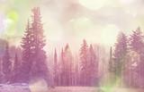 Winter forest.Instagram filter