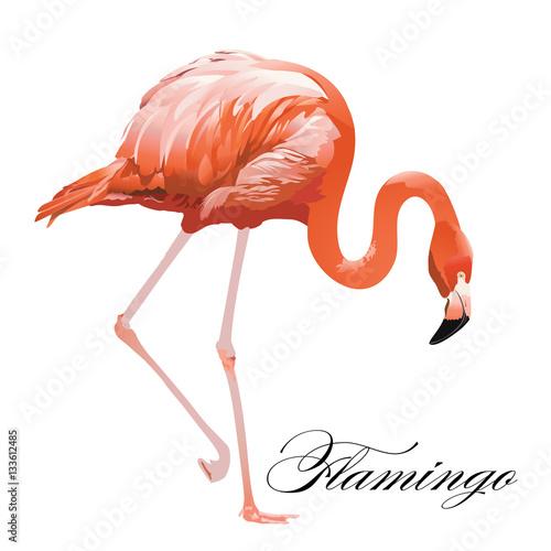 Foto op Aluminium Flamingo Vector Illustration of a Flamingo.