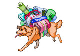 red dog - traveler ,  with luggage on his back , runs ,   on white background