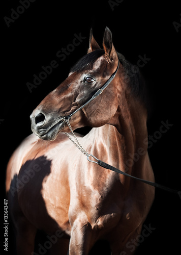 Poster portrait of beautiful horse at black background