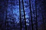 Luminous bamboo grove, a night of Kyoto Japan 竹林 夜景 日本 - 133656889