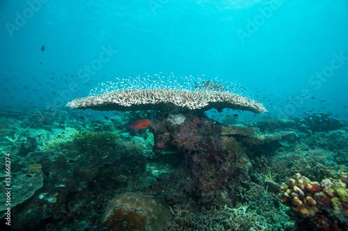 Foto op Canvas Turkoois Underwater landscape. Sipadan island. Celebes sea. Malaysia.