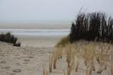 Strandgras am Meer - 133670266