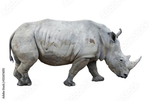 big rhinoceros isolated - 133676015