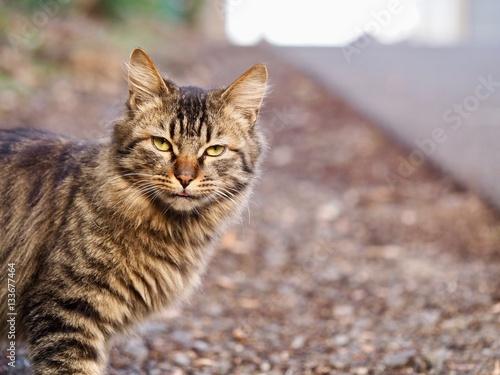 Poster 野良猫
