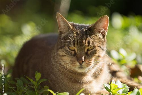 Poster Gato en el campo
