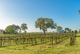 Vineyards at Coonawarra