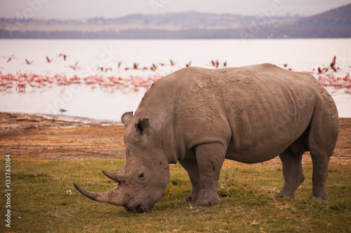 Rhinoceroses in Nakuru National Park